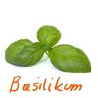 basilikum_Ink_LI