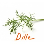dille_Ink_LI