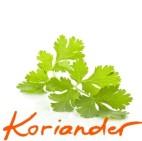 koriander_Ink_LI