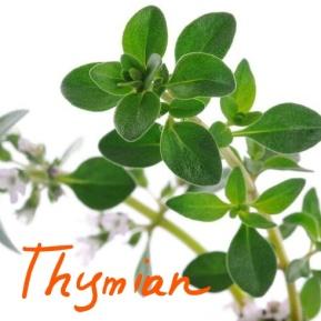 thymian_Ink_LI